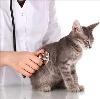 Ветеринарные клиники в Белебее